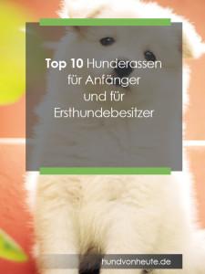 hunde-fuer-anfaenger