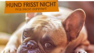 hund-frisst-nicht