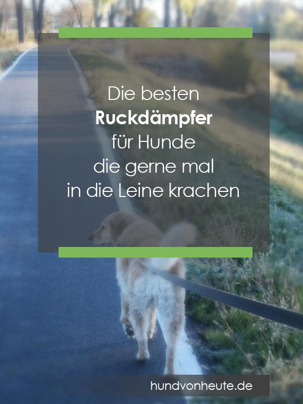 besten-ruckdaempfer-hunde