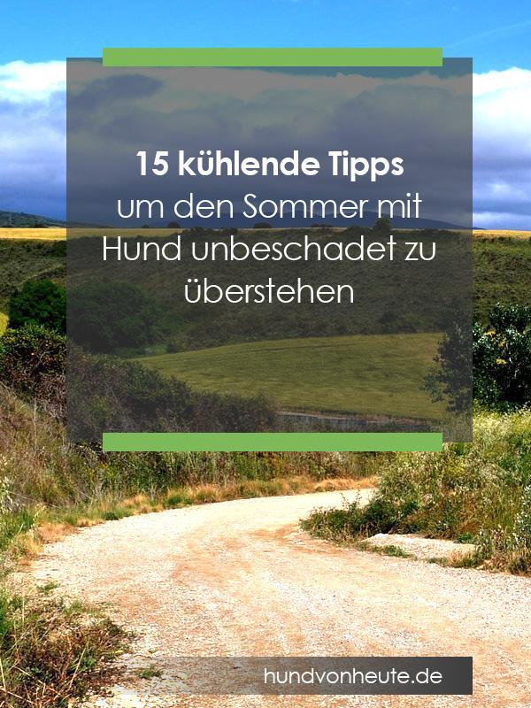 tipps-sommer-hund-hitzeschlag