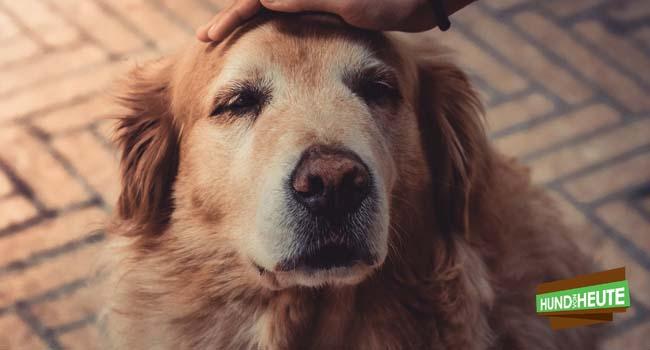 Vitamine für alte Hunde