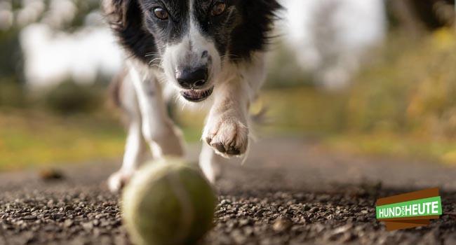 Vitamin E für Hunde